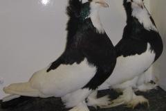 alfoldi-buga-galambok-02